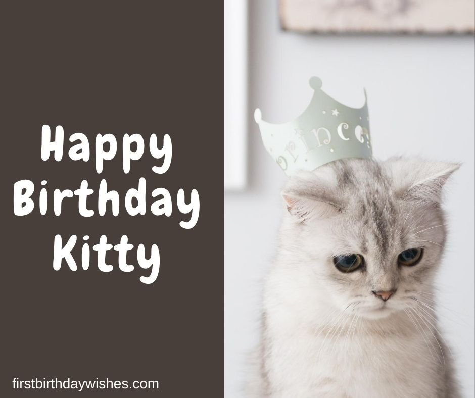 Birthday Wishes for Cat