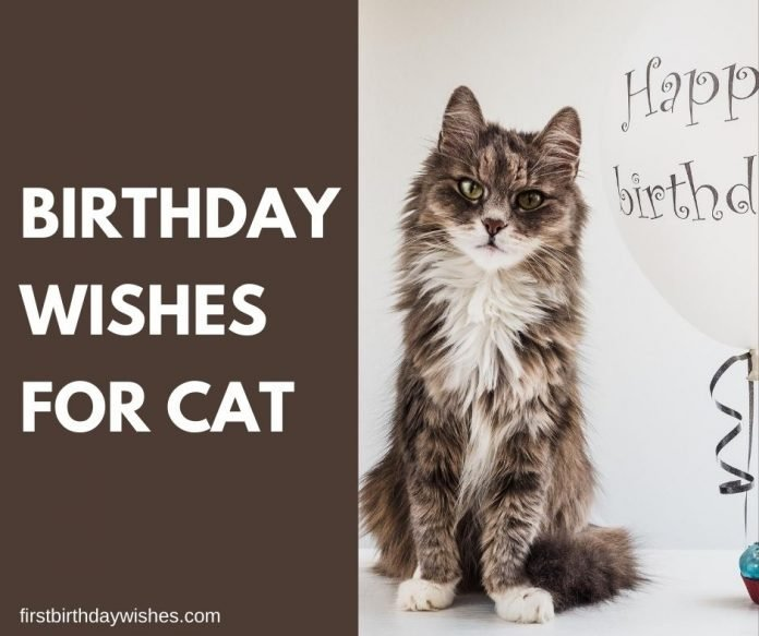 Cat Birthday Wishes